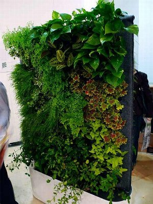 Définition du mur végétal